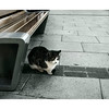 Cat by a street bench