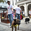Adopt a dog at Piazza