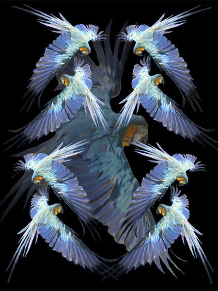 Bird Fantasy 01