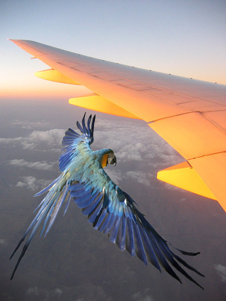 Bird Fantasy 02