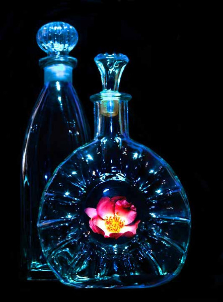 Rose in Bottle