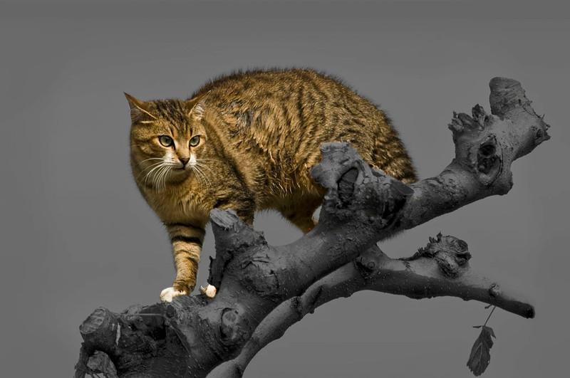 Wet Greek Cat
