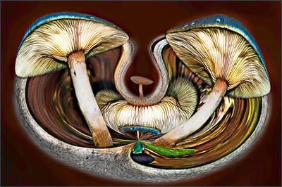 Fungi Fantasy