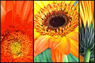 Flowers x 3