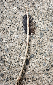 Natural Arrow
