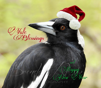 Magpie Greetings