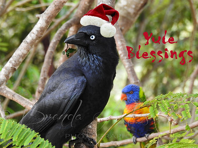 Crow Of Christmas