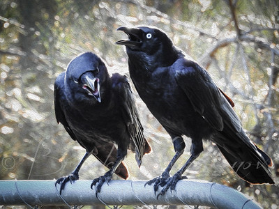 Conversational Crows