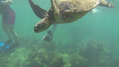 2013-05-09 Oahu snorkeling