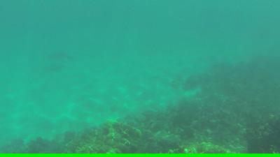 2013-05 Oahu videos