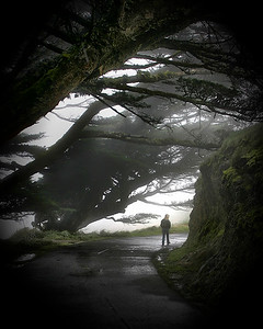 woods tunnel 35 - Point Reyes merged
