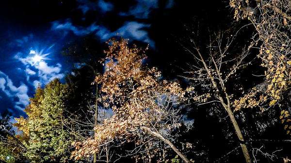 Backyard Night Timelapse Videos