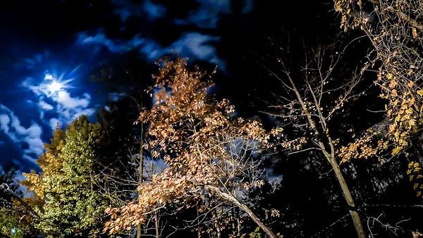 Night Timelapse Backyard 2