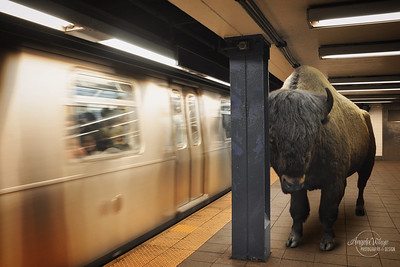 Bison Animal Waiting for City Subway Commute