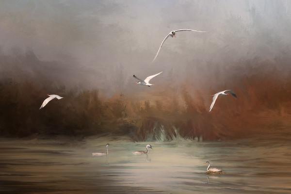 Caspian Terns - Creative Vision