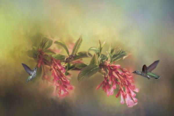 Hummingbird  - Creative Vision-3586