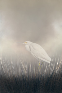 Snowy Egret - Creative Vision-7144