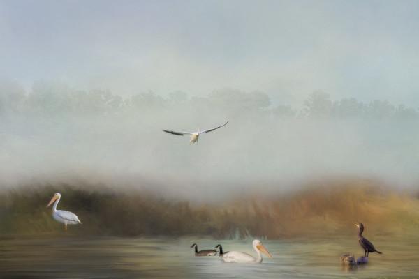 The Pond - Creative Vision
