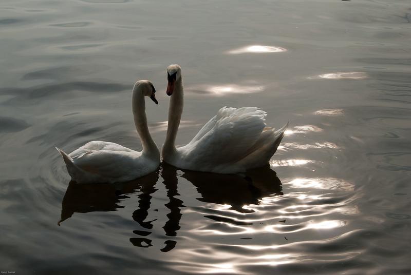 Shimmering love