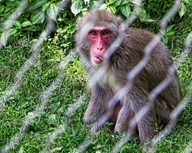 TJP-1079-Zoo-204-Edit