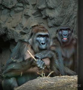 TJP-1079-Zoo-336-Edit-Edit