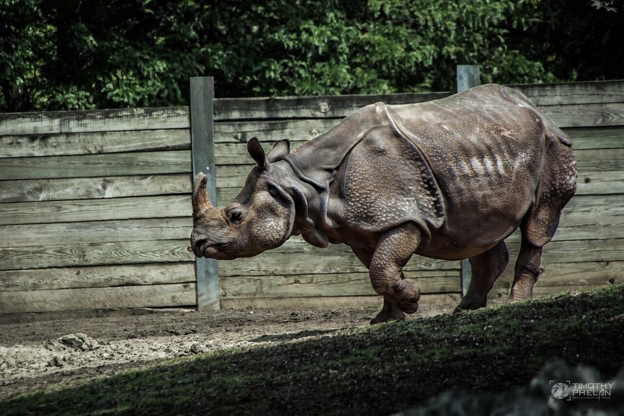 TJP-1079-Zoo-609-Edit