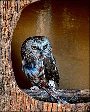 OwlBabyOwl2-Edit-2