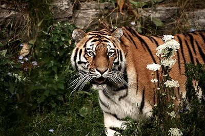 Phelan Tim CT Kitty wants Dinner