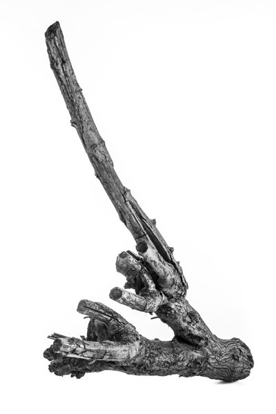 Mulberry Branch 2