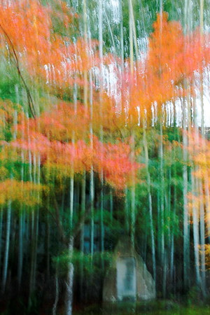 autumn-in-kyoto