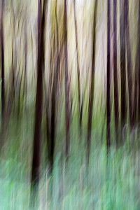 Coastal Oregon Forest