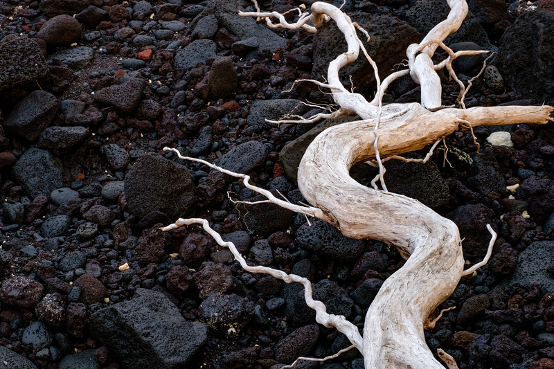 Roots Rock Lava
