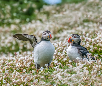Eric was one of the most helpful puffins any of them had ever met