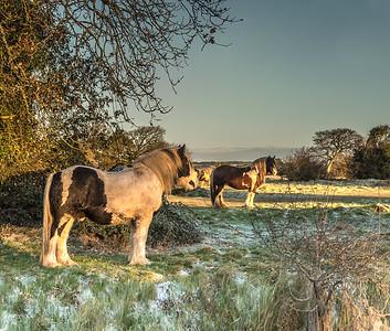 Rodborough Horses