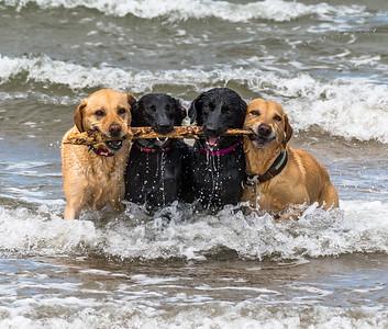 Sea Dogs!