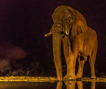Elephant NH 244 207 300dpi DONE NOISE 3095-.jpg