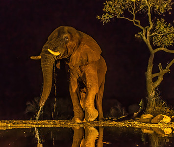 Elephant NH 244 x 207 300 dpi DONE-3059-Edit.jpg