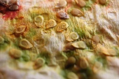Natures Seeds