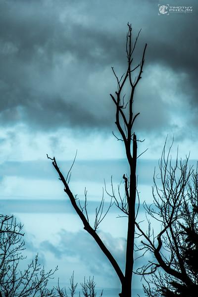 TJP-1068-Woodlands-340-Edit