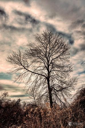 TJP-1068-Woodlands-129_30_31-Edit