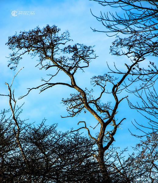 TJP-1068-Woodlands-108_09_10-Edit