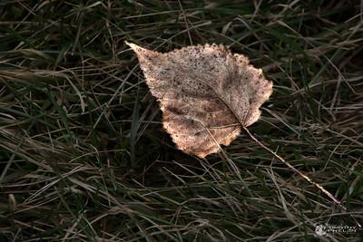 TJP-1068-Woodlands-330_1_2-Edit