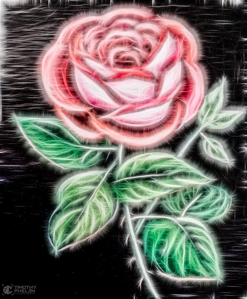 DSCN0097-Rose