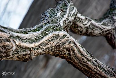 TJP-1068-Woodlands-38-Edit-Edit