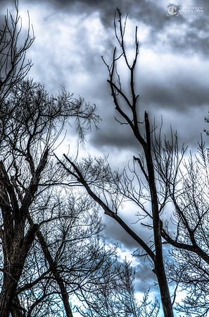 TJP-1068-Woodlands-348_49_50