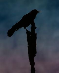 9213t1_031413_183609_7DL12 bird texture