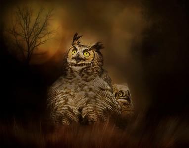 9613c-041906_1135AM-C37 great horned owl bird texture
