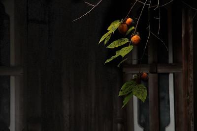 autumn highlight