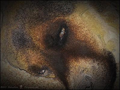 2015-11-10_PB100030_Mr Bear,Clearwater,Fl