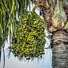 2018-12-24_300,,creative DT,palm tree nuts